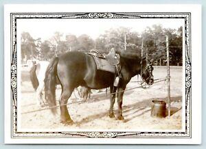 Minneapolis MN State Fairgrounds Photograph 1941~Pony Saddled Up, Ready to Go