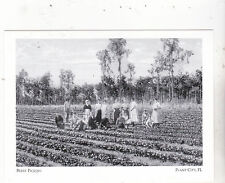"*Postcard-""Family Berry Picking on The Farm"" -*Plant City, FL. (A13-3)"