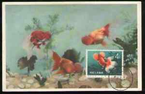 PRC. 508. S38-3. 4f. Goldfish. Stamp on Postcard with First Day Postmarked 1960