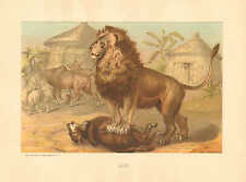 Lion, Zoology, Prang, Vintage, 1885 Antique Art Print.