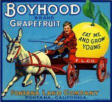 Fontana Boyhood Donkey Mule Grapefruit Citrus Fruit Crate Label Art Print