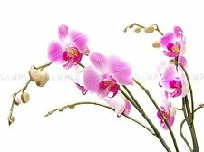ORCHID FLOWER PINK BLOSSOM PHOTO ART PRINT POSTER PICTURE BMP172A