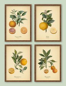 5x7'' 6x8'' VINTAGE ORANGES SET Botanical Prints Kitchen Vegan FIT IKEA FRAMES