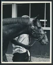 "1979 ""Spectacular Bid"", Perfect 10/10 Photo of World Famous Thoroughbred Winner"
