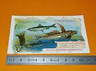 CHROMO CHOCOLAT AIGUEBELLE 1908-1912 POISSONS MER SARDINE ANCHOIS FISH FISCHE