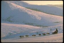 309031 Dog Musher Yukon Quest Race A4 Photo Print