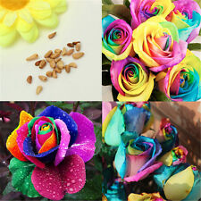 100Pcs Splendid Rare Rainbow Rose Flower Seeds Plant Home Garden