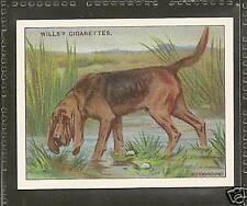 1914 Reissue UK Arthur Wardle Dog Art Body Study Wills Cigarette Card BLOODHOUND