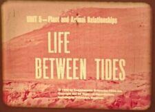 16mm film Between Tides ocean sea plant fish animal life pools octopus marine