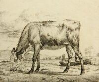 A. van de VELDE(1636-1672), Grasender Stier in sanfter Hügellandschaft, Rad.