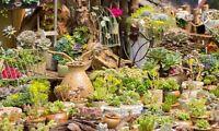 Bag Bonsai  Real Mini Succulent seeds Rare Perennial Herb Plants 30 Seeds