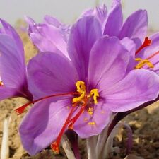 1 gr Finest Quality Saffron Threads, All Red, 100% Pure and Natural