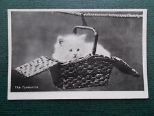 VINTAGE CAT POSTCARD - THE FAVOURITE - CATS - KITTENS