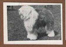 Old English Sheep Dog Canine Pet 1950s Ad Trade Card