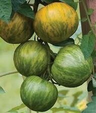 30 GREEN ZEBRA TOMATO SEEDS HEIRLOOM 2019 (non-gmo heirloom vegetable seeds!)