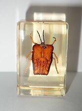Ghost Bug Tessaratoma papillosa in Amber Clear Block Education Insect Specimen