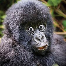 Tarjeta Cumpleaños Divertido Adorable Feliz Gorila Mono Saltones 3D Movibles