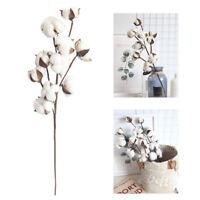 10 Heads Dried Cotton Artificial Flower Cotton Stem Floral Branch Decor