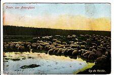 Amersfoort AK 1908 Op de Heide Schapen Schafe Niederlande Nederland 1511835