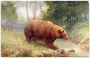 Artist Signed. Illustrateur. Bear Brun. The Brown Bear. Oilette