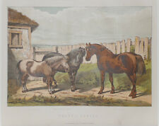1890 Antique Print HORSE / PONY Ben Herring - Chromolithograph - Mounted