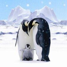 Antarctique rois Pingouin Mère Père & Bébé Lot de 10 petits carrés de Noël Cartes
