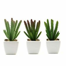 """Set of 3 7"""" tall Assorted Succulent Cactus Plants with Off White Ceramic Pots"""