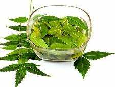 Fresh Neem Leaves 100g for Acne , Skin Care , medical use . neem Leaf P&P UK