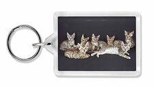 Bengal Kittens Posing for Camera Photo Keyring Animal Gift, AC-29K