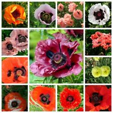 100 Poppy Flower Seeds Papaver 20 Kinds Perennial Annual Beautiful Garden Plants