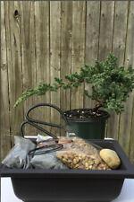 New listing Juniper Bonsai Tree Kit- 4 year old prebonsai