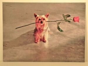 """Need I Say More?"" Yorkshire Terrier Dog with Rose AVANTI Valentine's Day Card"