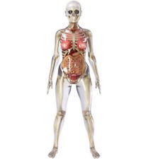 Female Anatomy Model Full Skeleton Anatomically Correct Highly Detailed
