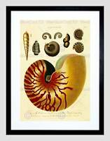 PAINTING BOOK SHELL CONCH CONCHOLOGY UK FRAMED PRINT B12X11783