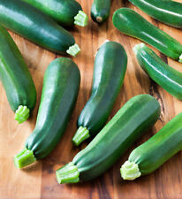 *BEST DEAL* ZUCCHINI 'Black Beauty' 50 HEIRLOOM Seeds FAST GROWING easy to grow