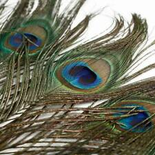 10PCS PEACOCK TAIL FEATHERS Feather NATURAL 26cm LONG Bouquet MILLINERY CRAFT YK