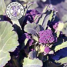 Raro Broccoli Inglés Violeta vegetales-Aprox 80 Semillas-Reino Unido Vendedor