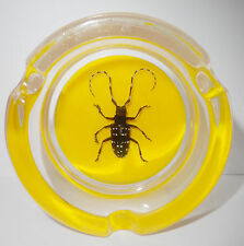 Insect Ashtray Asian Spotted Longhorn Beetle Specimen on Yellow Bottom