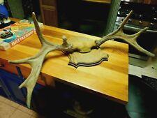 Antlers Moose? Elk? Set~Mount~Decor~Rack~Taxi dermy~Deer?~Cabin~Hunting~ Lot