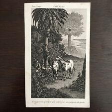 Gravure Ancienne 19e - L'onagre âne sauvage - Zoologie