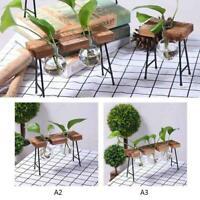 Flower Pot Glass Vase Planter for Hydroponics Plant Wooden Stand Desktop Decor T