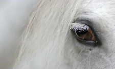 Framed Print - White Horse's Face Close View (Picture Poster Animal Art)