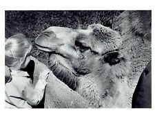 1979 Original Photo child girl plays with camel at Detroit Zoo animal exhibit