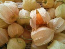 50 mgr (400 seeds) physalis peruviana Golden Berry Pineapple,Cape Gooseberry.