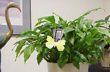 Yellow Butterfly - Fluttering - Solar Powered - Gardens..5.... EB-00349