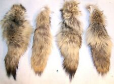 2 REAL COYOTE NATUARAL TAILS fur coats new animal tail hide pelts taxidermy fox