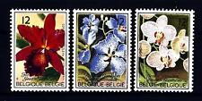 BELGIUM - BELGIO - 1985 - Festival dei fiori di Gand: orchidee