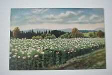 Postcard Artist Signed Art P.Hommel Flowering Meadows Unposted