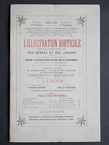 1886 L'ILLUSTRATION HORTICOLE MONTHLY BOTANICAL MAGAZINE 3 COLOUR PRINTS LINDEN