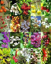 FLORIDA NATIVE BERRIES MIX, rare coast plum fruit WILD BERRY wood seed -15 seeds